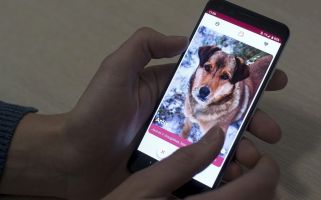 'It is like Tinder, but with dogs.'