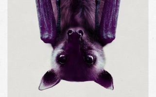 Barry Mcstay's new play both draws attention to the engagement of Greater mouse eared bats and thoroughly entertains.
