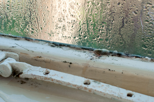 How To Deal With A Mouldy Student House The National