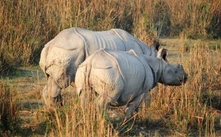 Kaziranga has returned to headlines after its brutal anti-poaching strategies became known.