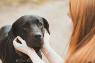 Canine therapy sessions have a positive impact on students' stress and happiness levels