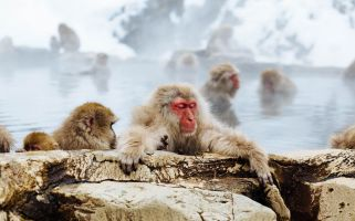 We can think of things worse than sharing a thermal bath with a few monkeys or swimming in the heart of Budapest.
