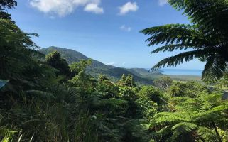 Queensland is home to around 500km of rainforest - here's how to see it.