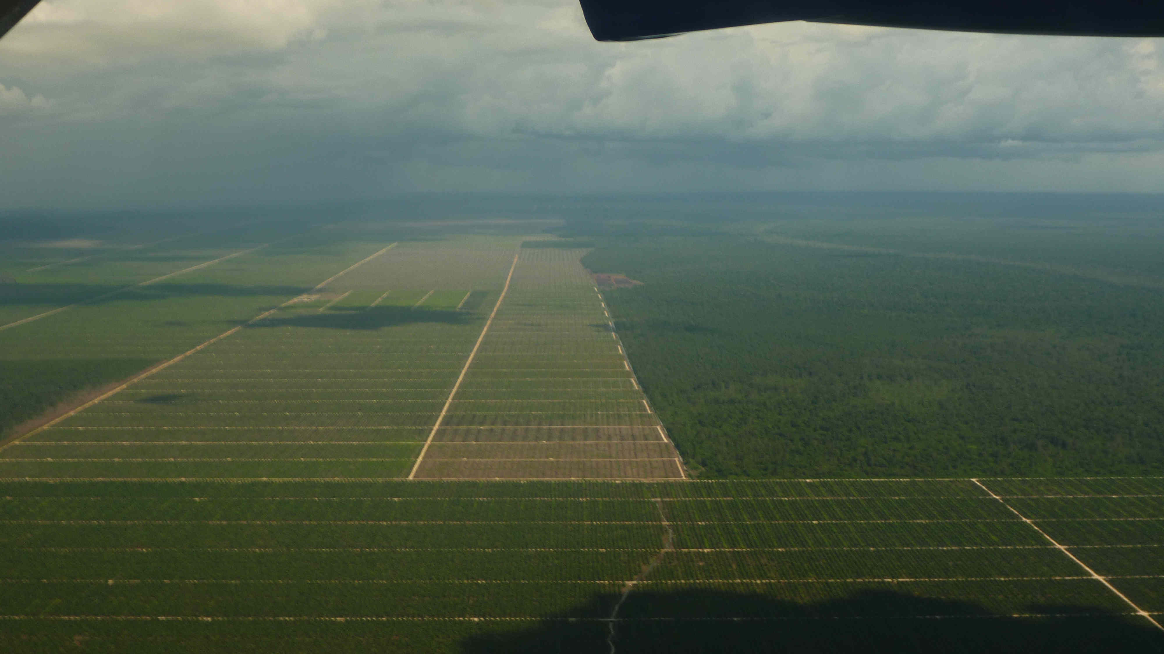 Palm Oil Plantations in Malaysia